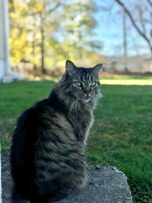 Alex's cat, Marley