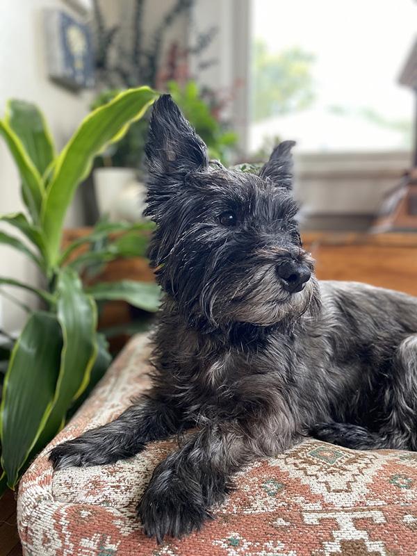 Sam's dog, Walnut