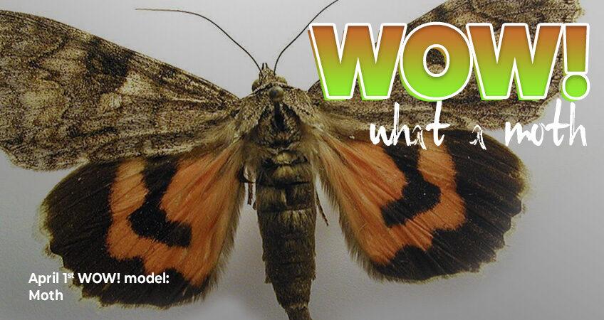 Wow, what a moth